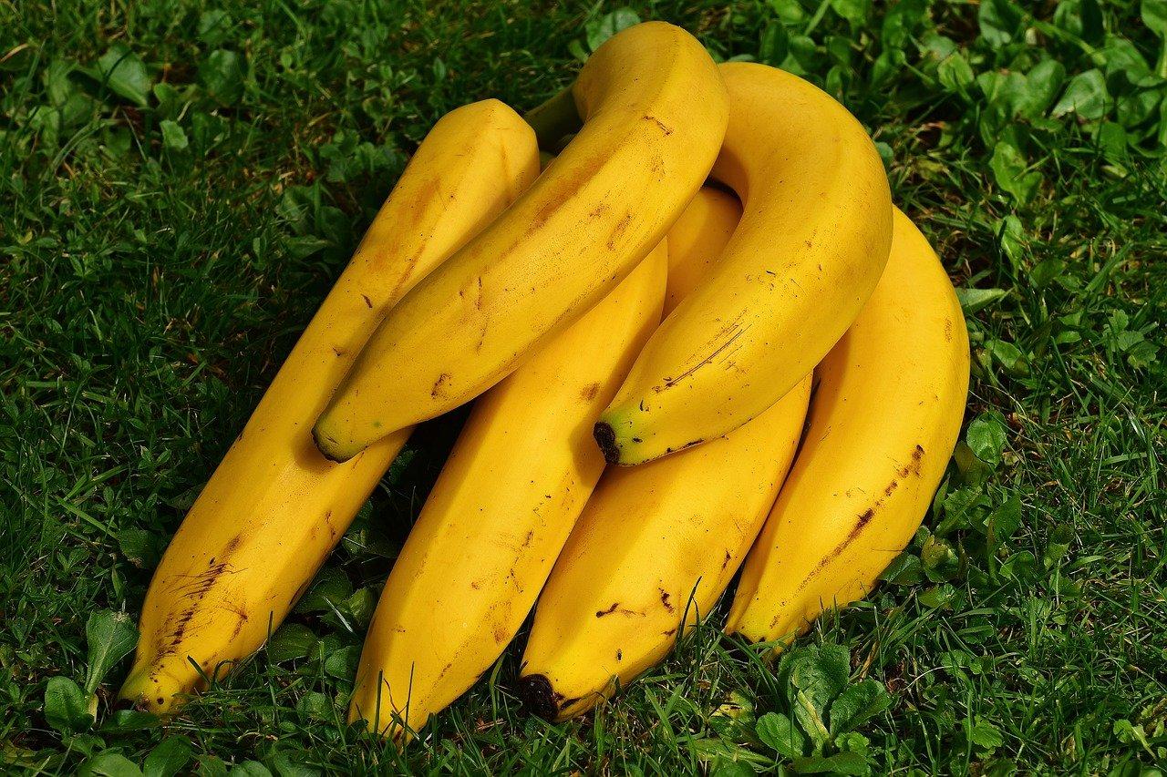 l'ozone pour faire mûrir les bananes grâce à l'ozone