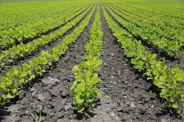 utilisation ozone dans l'agriculture