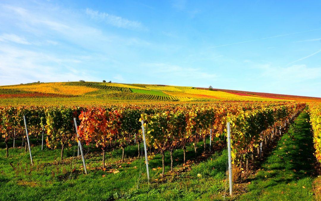 utilisation de l'ozone pour ladesinfection des barriques de vin