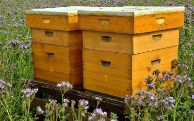 L'ozone dans les ruches